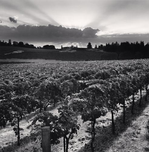 Clear Mountains Vineyard, Napa Valley, California, USA, 2001