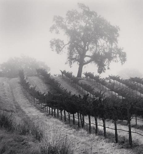 Knights Valley Vineyard, Napa Valley, California,2001