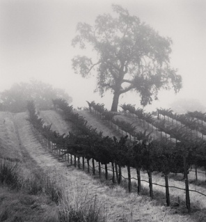 Knights Valley Vineyard, Napa Valley, California, 2001