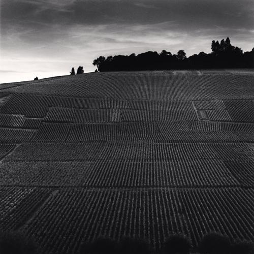 Terrace of Vineyards, Hautvillers, France.2001