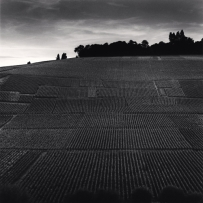 Terrace of Vineyards, Hautvillers, France. 2001