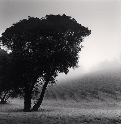 Tre Colline Vineyard, Napa Valley, California, USA,2001