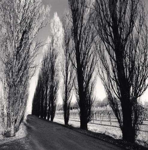 Vineyard Road, Castelfranco, Emilia Romagna, Italy.2008