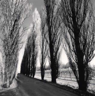 Vineyard Road, Castelfranco, Emilia Romagna, Italy. 2008